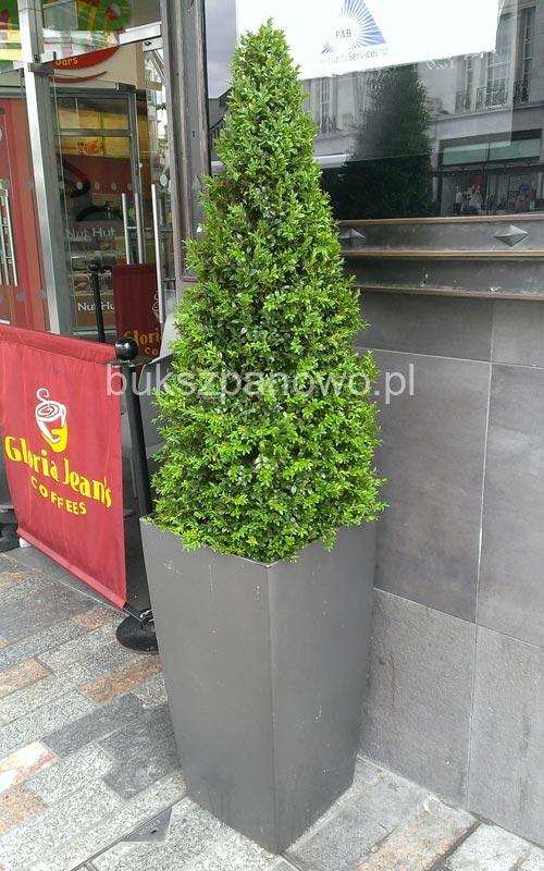 Bukszpan topiary